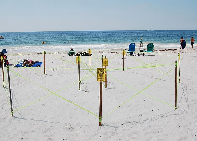 Sea Turtle Nest 2017
