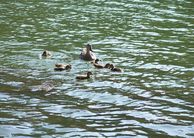 Feed the Ducks