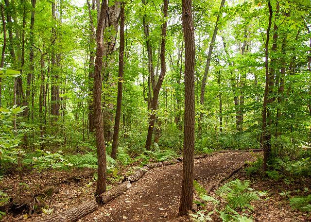 Forest - White Pine