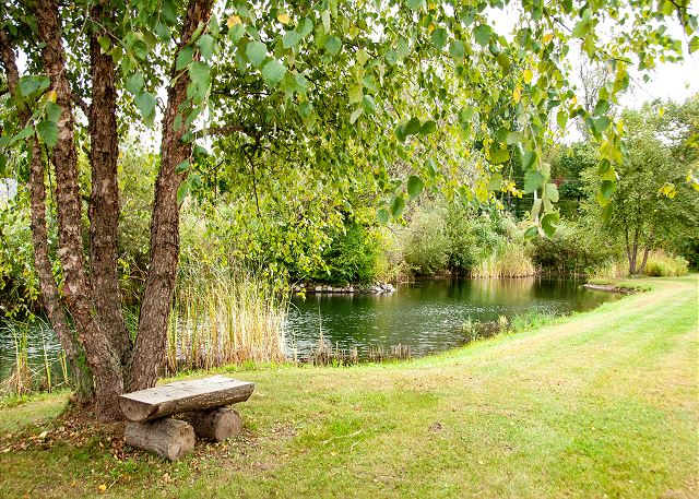 Pond - White Pine