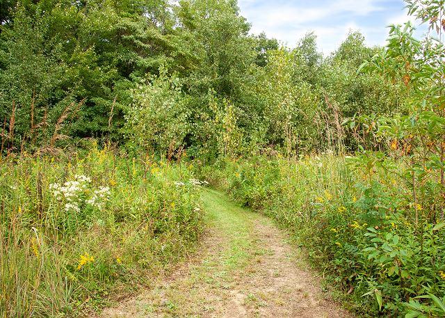 Trail - White Pine
