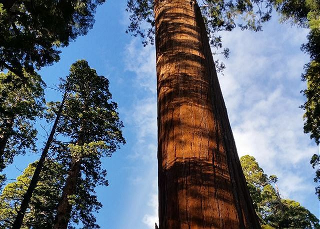 Calaveras Big Trees State Park, home to Giant Sequoias, is 5 less than mins away