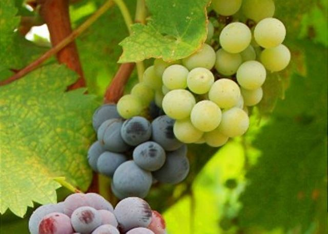 Taste wine at the myriad of wineries on and off Main Street in nearby Murphys