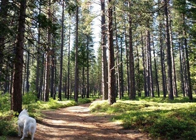Discover the Arnold Rim Trail