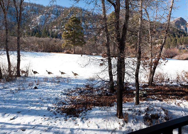 Our Resident Turkeys