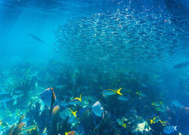 Snorkeling at Sombrero Reef