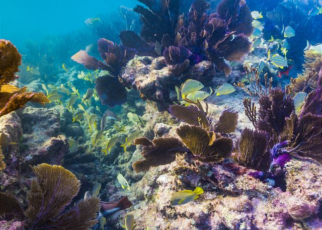 Local Attractions - Sombrero Reef. Great for Snorkeling!