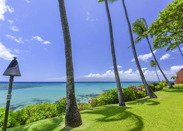 Coconut trees next to beach