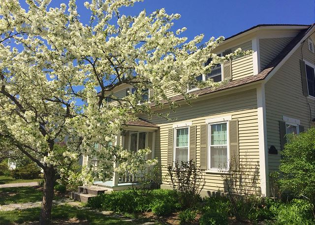 You'd be hard pressed to find a prettier vacation rental come Spring when these trees are in full bloom.