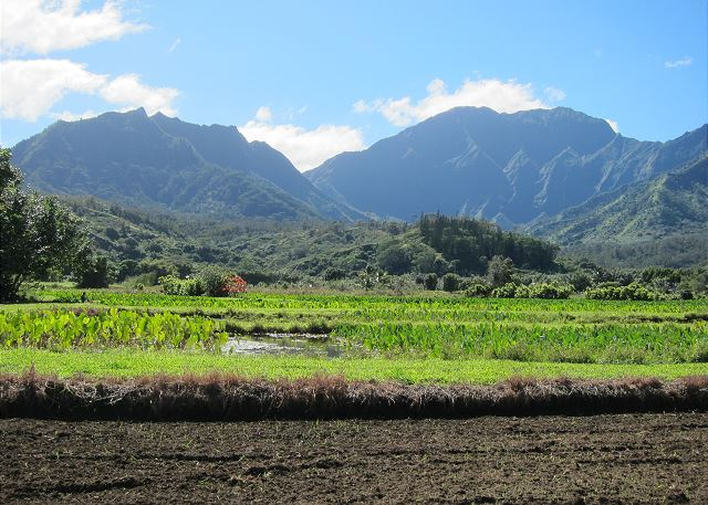 Beautiful North Shore of Kauai taro fields.