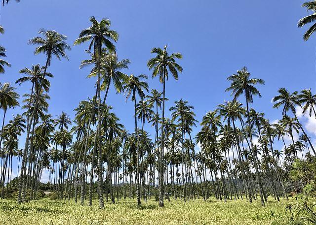 Coconut Grove neighbor