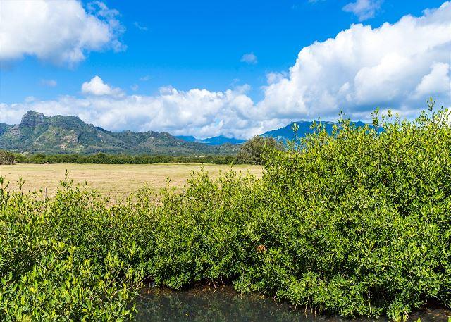 Kauai has many great hiking spots! Sleeping Giant in the backgro