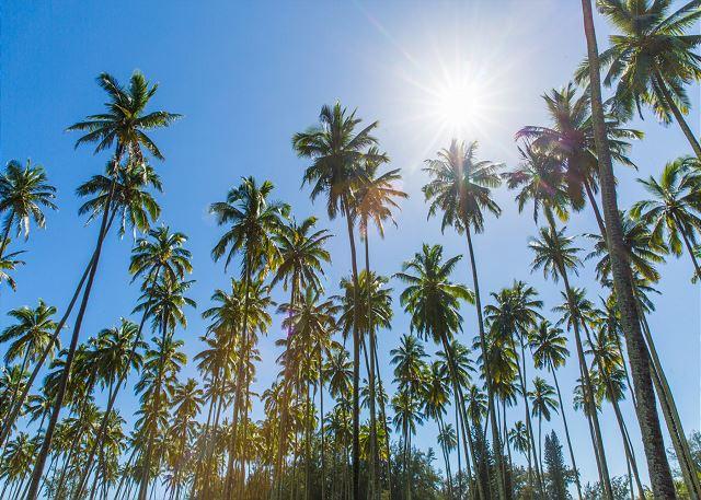 Beautiful Coconut Coast