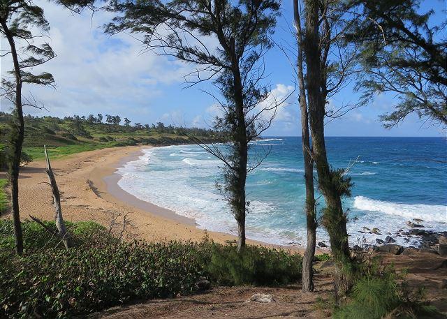 Kauai Beach on Bike Path