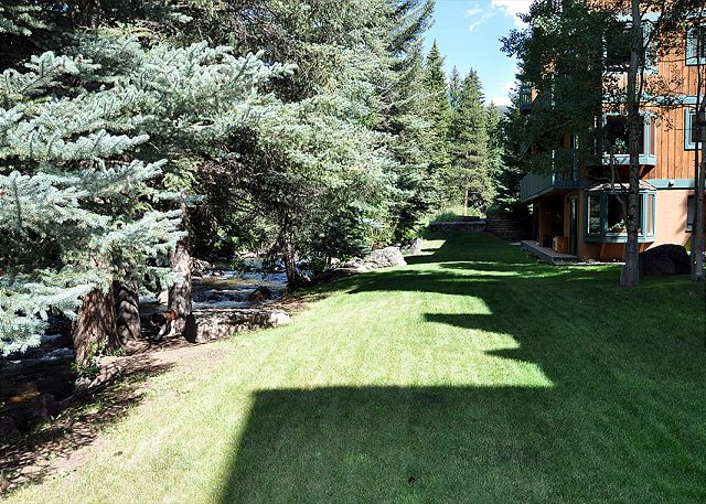 Lawn framed by evergreen trees