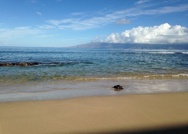 Beach and view of Molokai just steps from Apartment 120.