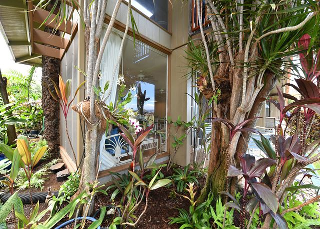 Tropical plants, ti leaves, blooming orchids and bromeliads, viewable from the picture window