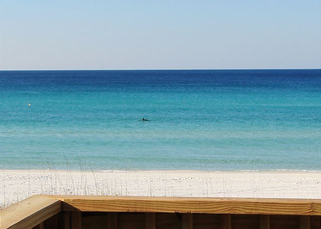 Watch Dolphins from your Deck