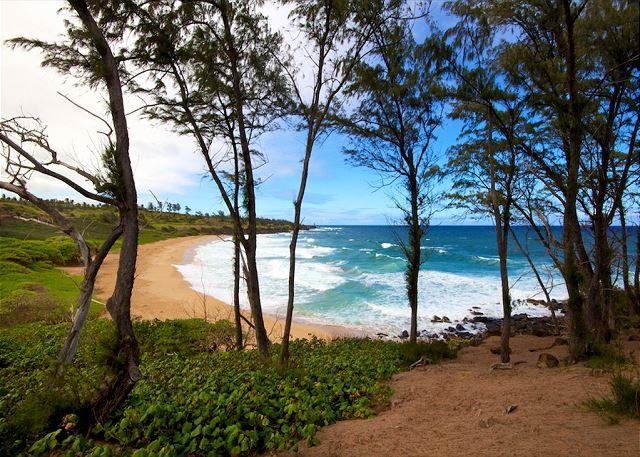 Kauai Kailani 306 200