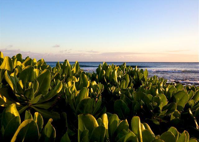 Waipouli Beach Resort H107 190
