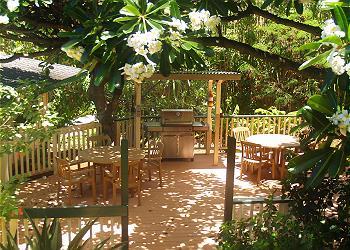Poipu Plantation Hibiscus 180
