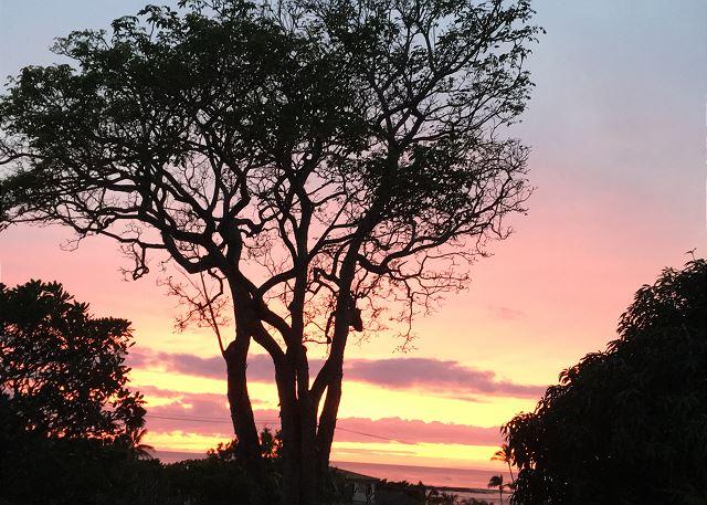 Poipu Plantation Hibiscus 200