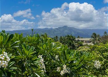 Poipu Plantation Plumeria 170