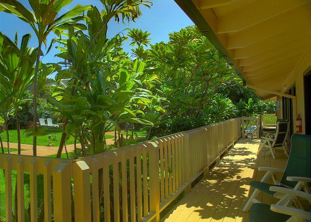 Poipu Plantation Mango 120