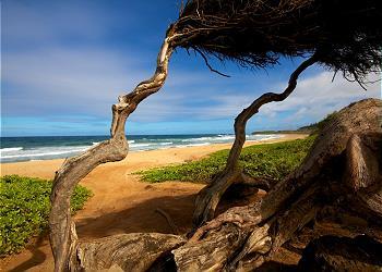 Waipouli Beach Resort A301 250