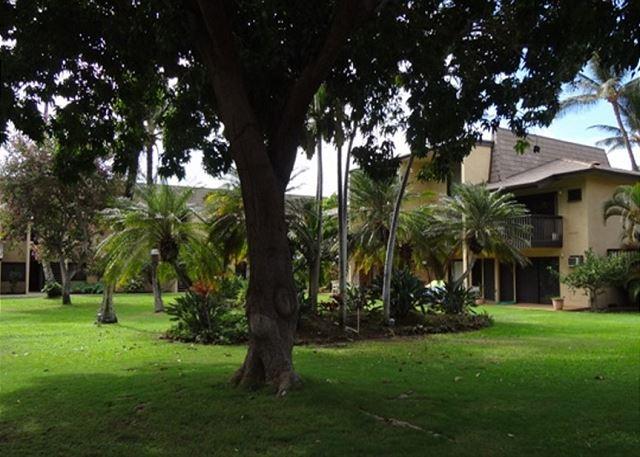 Kihei Garden Estates B201 Grounds