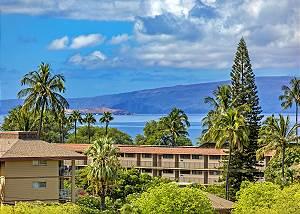 Maui Banyan #Q1352-403