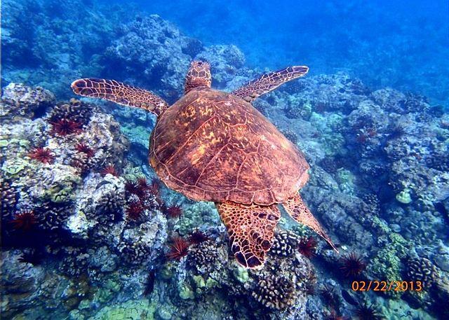 Hale Ili Ili #D Snorkeling Reef In front of the condo