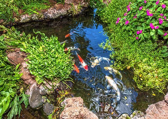 Hono Kai Resort B16 | Photo