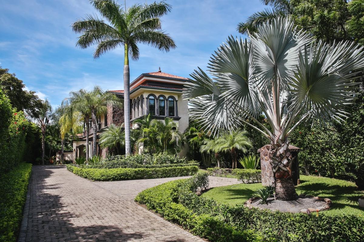 Casa Serena's royal palms