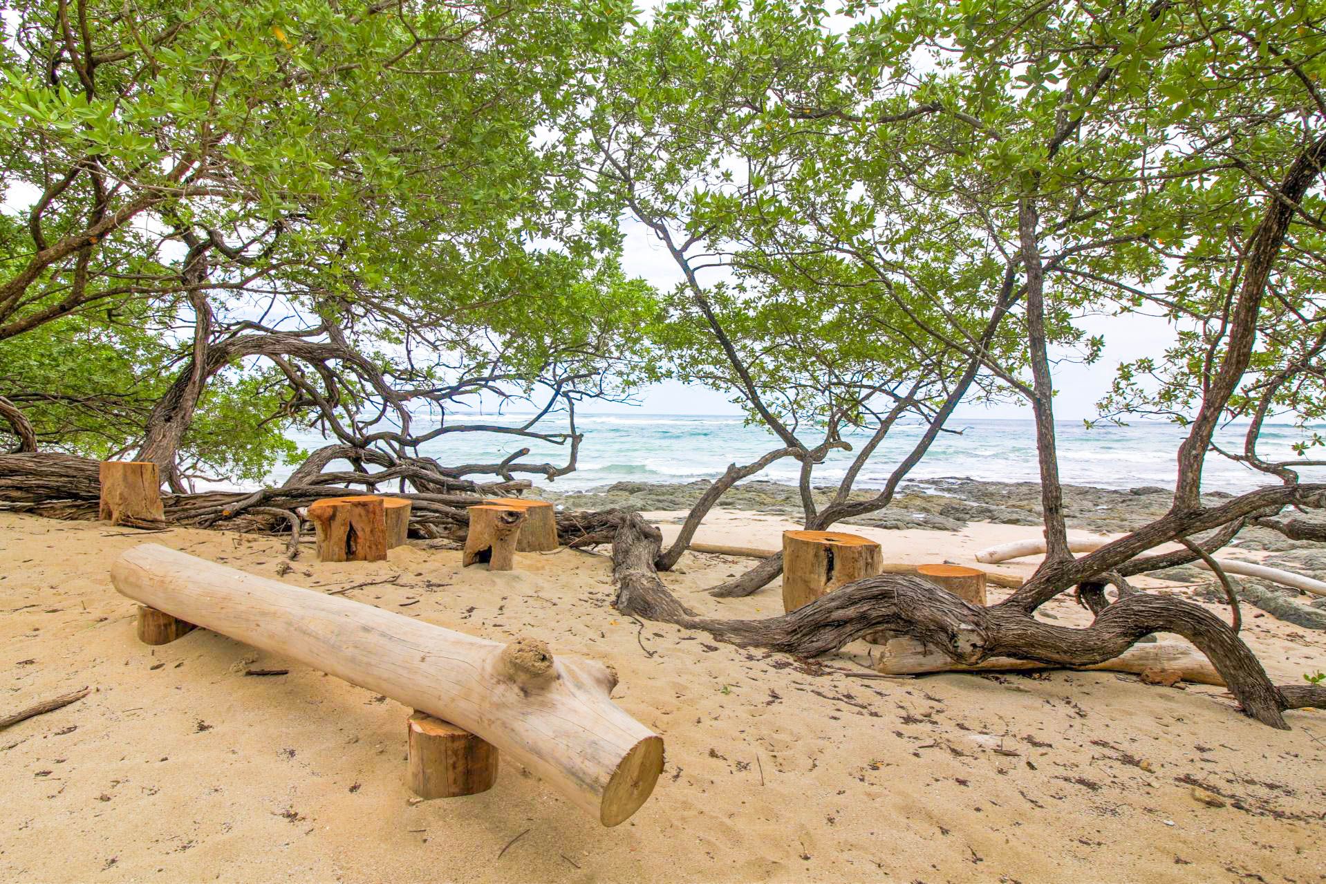 Natural furniture created from a log that washed up on the beach