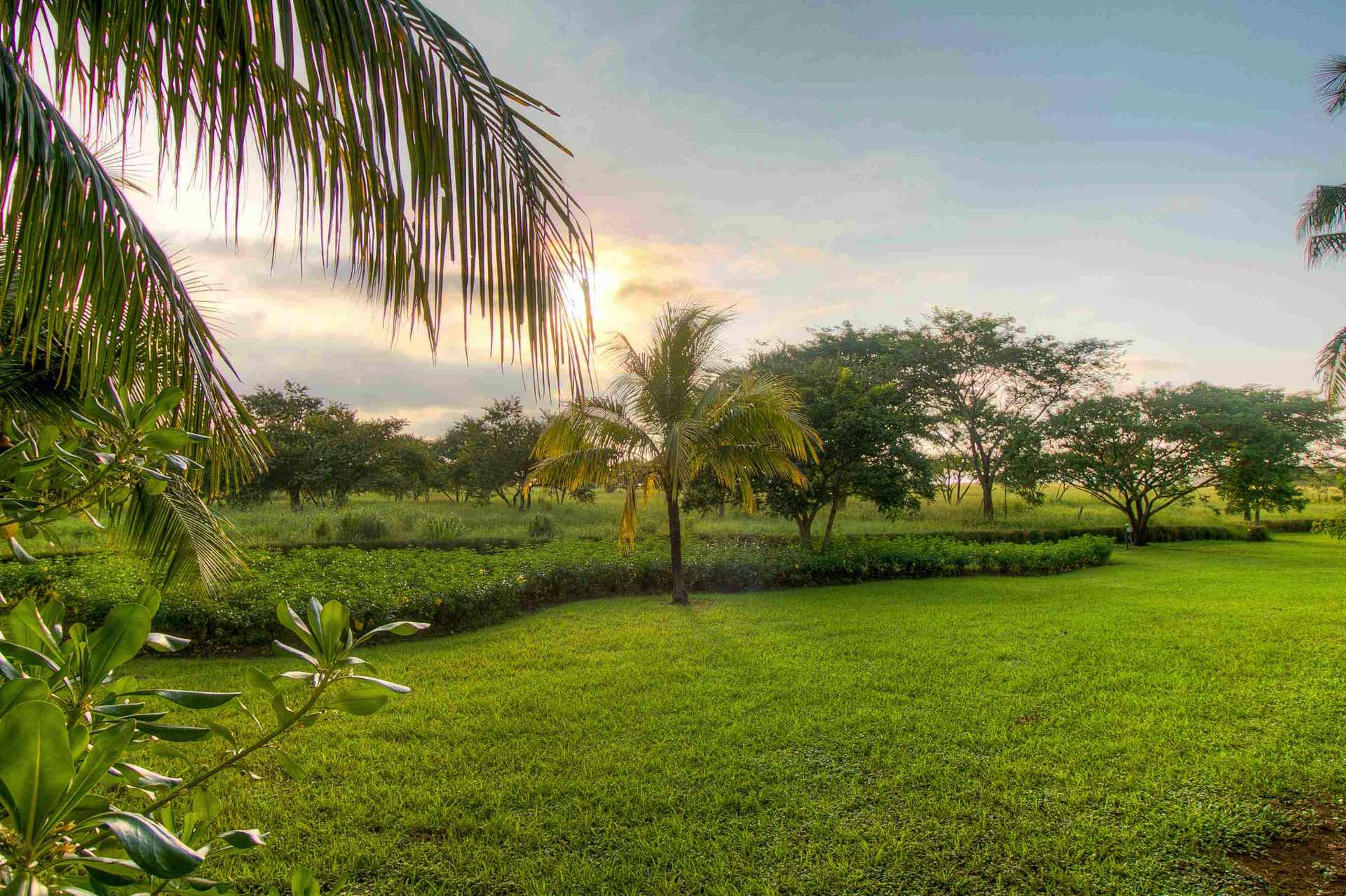 The endless green of Guanacaste