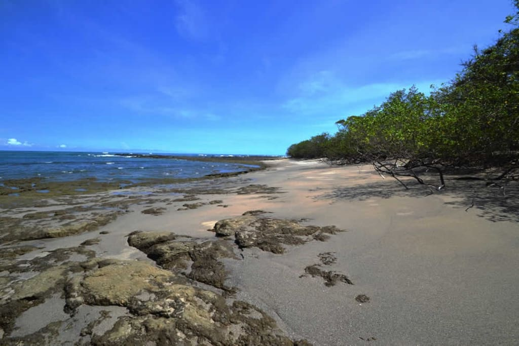 Sand, volcanic rock, and mangrove trees