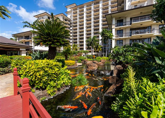 Koi ponds by Ocean Tower