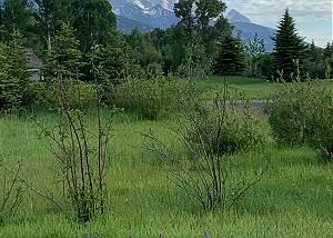 Yard - Enjoy Teton Views