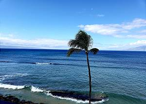 733f8c4b9459 Kaleialoha #414. $145 ... $285 per night. 1 bedrooms. 4 Max Occupancy.