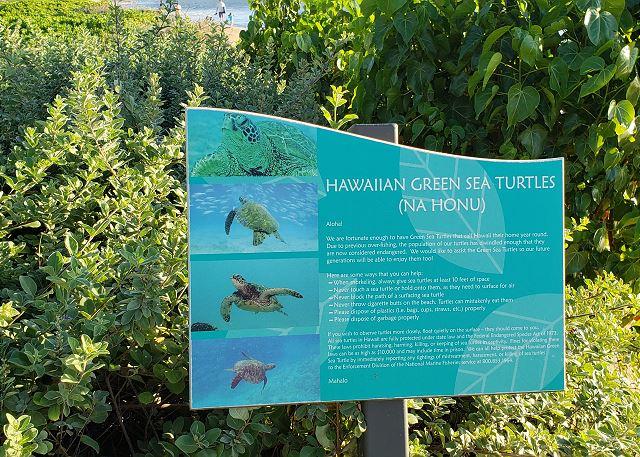 Sea Turtle Signage