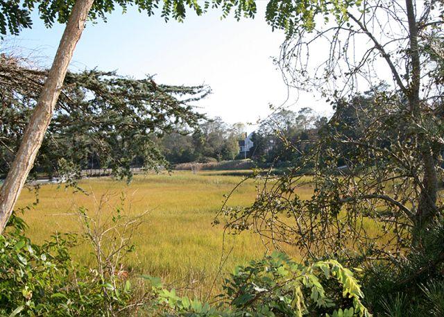 Marsh Views