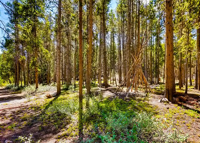 Peaceful surrounding forest