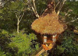 Treehouse 1 Dos Ramas 35ft - Sleeps up to 3