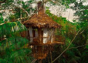 05 Treehouse 5 Bamboo House- 25ft sleeps 3 1 king or 2 twins + cot