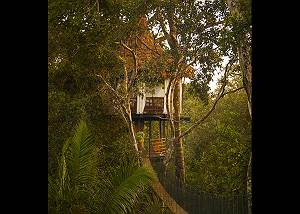 Treehouse 7 Solitude Suite 65ft - Sleeps up to 3