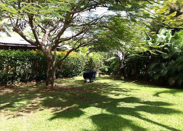 Shaka Hale's back yard is lovely with graceful poinciana trees, aerica palms, and traveller palms.