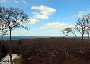 Winter Photo  Think Lush Green Trees