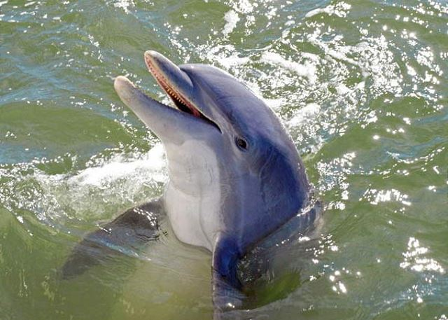 Watch for the Dolphins that swim along our Shoreline each day