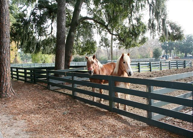 Walk or Bike to Lawton Stables